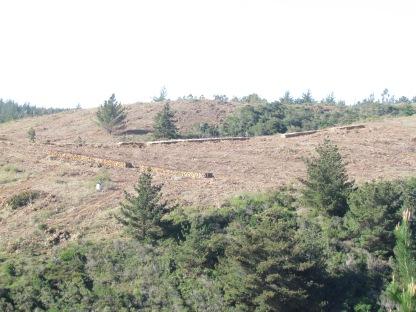 Deforestación en Chile, Navidad, Sexta Región