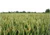 Phosphor, Vielfalt oder Hunger? Wie wir den Boden in unserem Land nutzen(wollen)