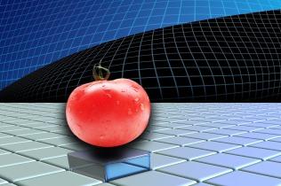 tomato-1493866_1920